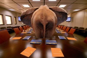 EK_Vested_Elephant_image_ph1