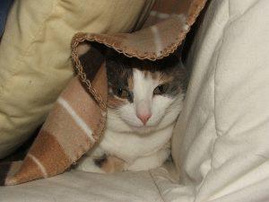 hiding_dave-bowen